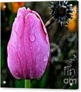 What's Old And New Acrylic Print
