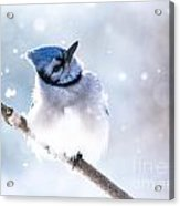 Whats Up With This Snow Acrylic Print