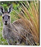 What'ya Lookin' At? Acrylic Print by Sally Nevin