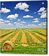 Wheat Farm Field And Hay Bales At Harvest In Saskatchewan Acrylic Print