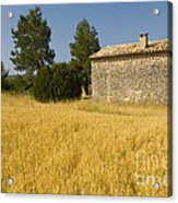 Wheat Field, France Acrylic Print