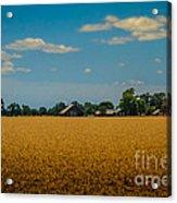 Wheat Field Acrylic Print