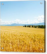 Wheat Field Near D8, Brunet, Plateau De Acrylic Print