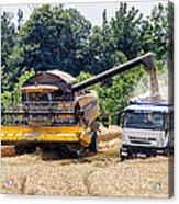 Wheat Harvest Acrylic Print