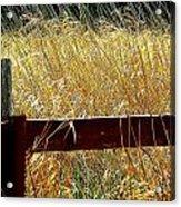 Wheat N' Fence Acrylic Print