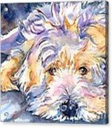 Wheaten Terrier Painting Acrylic Print