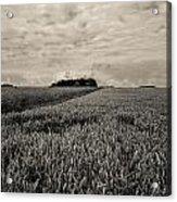 Wheatfields Acrylic Print