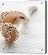 Whelk Shell New Jersey Beach Acrylic Print