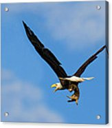 When Dogs Fly Acrylic Print