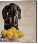 When Life Gives You Lemons... Acrylic Print