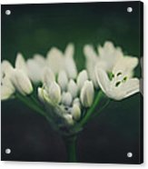 When Love Was Young And New Acrylic Print