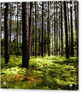 When The Forest Beckons Acrylic Print