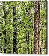 When The Forest Calls To Me Acrylic Print
