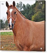 When You Look Me In The Eyes Acrylic Print