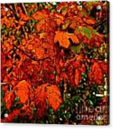 Where Has All The Red Gone - Autumn Leaves - Orange Acrylic Print