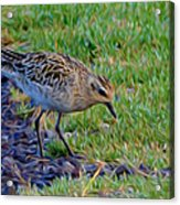 Where Is Breakfast Acrylic Print
