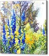 Where The Delphinium Blooms Acrylic Print