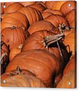 Which One Is The Great Pumpkin Acrylic Print