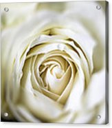 Whie Rose Softly Acrylic Print