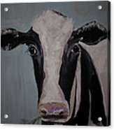 Whimisical Holstein Cow Original Painting On Canvas Acrylic Print
