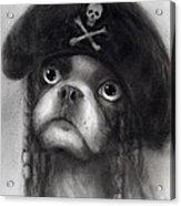 Whimsical Funny French Bulldog Pirate  Acrylic Print
