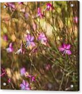 Whirling Butterfly Bush Acrylic Print