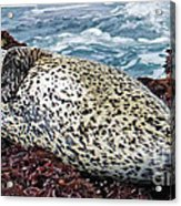 Whiskers And Spots Acrylic Print