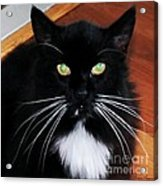 Whiskers Acrylic Print by Lorraine Louwerse