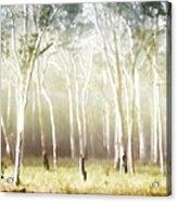 Whisper The Trees Acrylic Print
