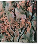 Whispering Cherry Blossoms Acrylic Print by Janice MacLellan