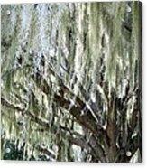 Whispering Oaks Acrylic Print