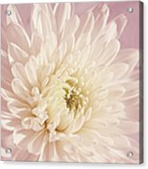Whispering White Floral Acrylic Print