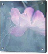 Whispering Wild Rose Acrylic Print