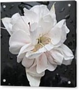 White And Black Art Acrylic Print