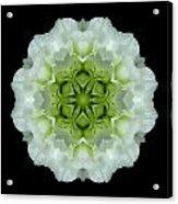White And Green Begonia Flower Mandala Acrylic Print