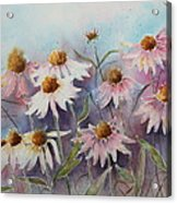 White And Pink Coneflowers Acrylic Print by Patsy Sharpe