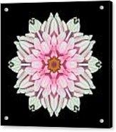 White And Pink Dahlia I Flower Mandala Acrylic Print