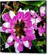 White And Purple Wildflower Acrylic Print by Mark Malitz