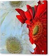 White And Red Flowers Acrylic Print