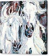 White Arabians Acrylic Print