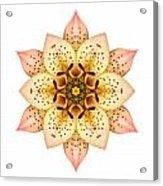 Asiatic Lily II Flower Mandala White Acrylic Print