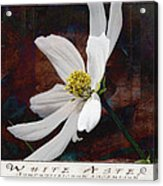 White Aster Study Iv - Titled Acrylic Print