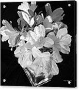 White Azaleas On Black Acrylic Print