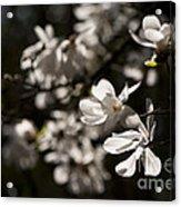 White Beauty Acrylic Print