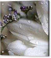 White Beauty Acrylic Print by John Holloway