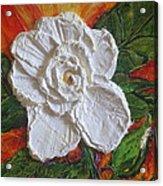 White Begonia Acrylic Print