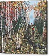 White Birch Trail Ride Acrylic Print