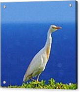 White Bird Green Plants Blue Sea And Sky Acrylic Print