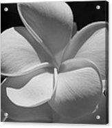 White Bloom B W Acrylic Print