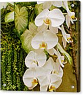White Blooming Trail Acrylic Print